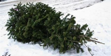 Christmas Tree Recycling (JPG)
